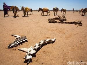 Hewan-hewan di Somalia Mati Kelaparan