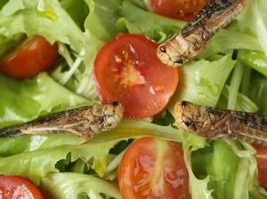Restoran Ini Tawarkan Kelas Memasak untuk Sajian Serangga!
