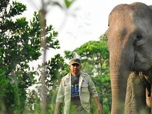 """Kisah """"Patroli Gajah Terbang"""" di TN Tesso Nilo Riau"""