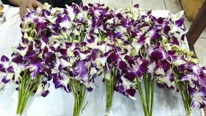 Anggrek Thailand Dicari Pembeli untuk Hiasan di Acara Pernikahan