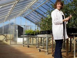 Peneliti Australia Temukan Cara Mencegah Jamuran Pada Makanan
