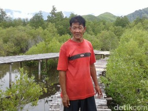 Cerita Baba Kong Ciptakan Hutan Mangrove, Sempat Dicibir Warga