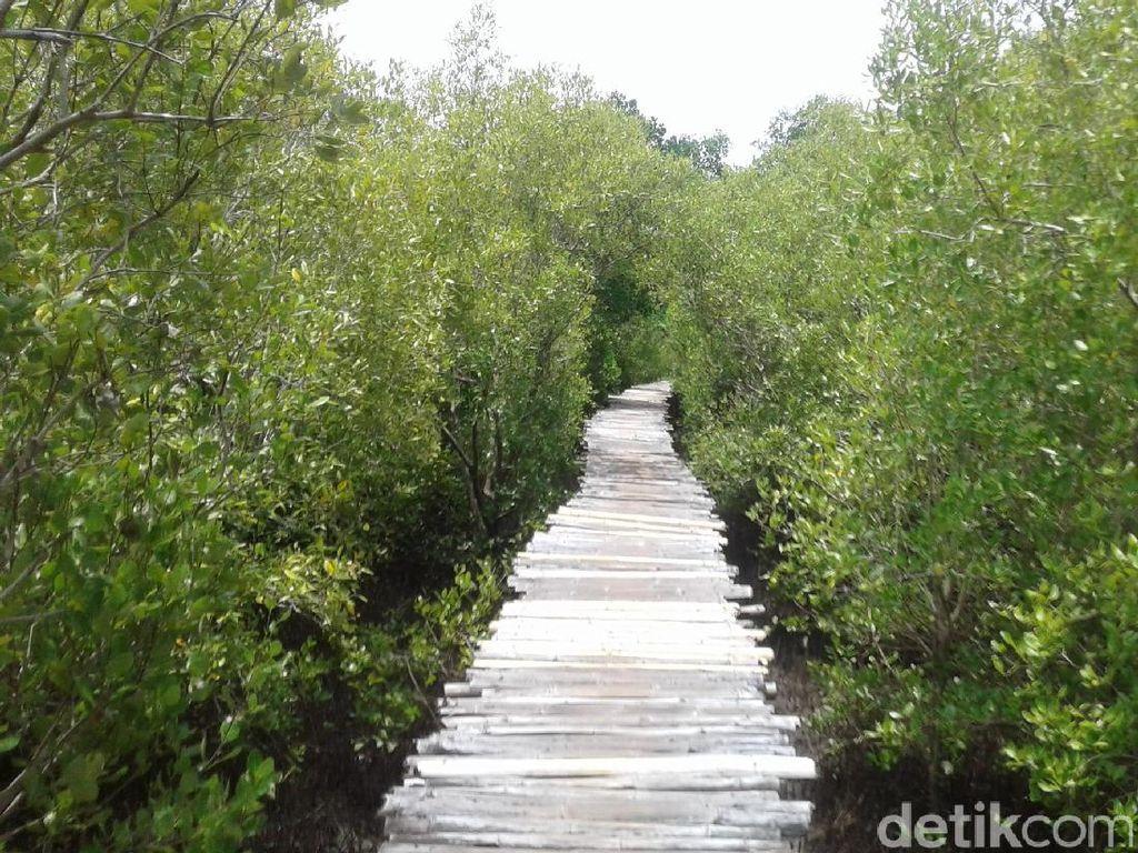 Harta Karun Tersembunyi di Maumere: Hutan Mangrove Magepanda