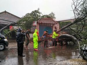 Hujan Angin, Pohon Tumbang Menimpa Mobil di Majalaya Bandung