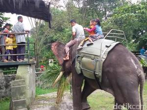 Liburan Nyepi, Bonbin Gembira Loka Yogyakarta Dipadati Pengunjung