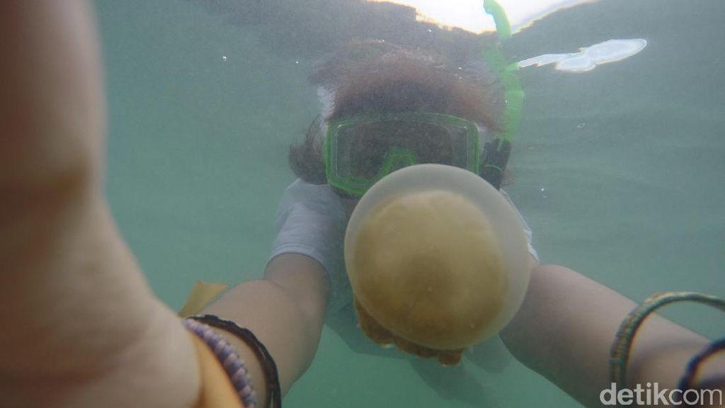 Lepas Rindu Berenang dengan Ubur-ubur Lewat Foto
