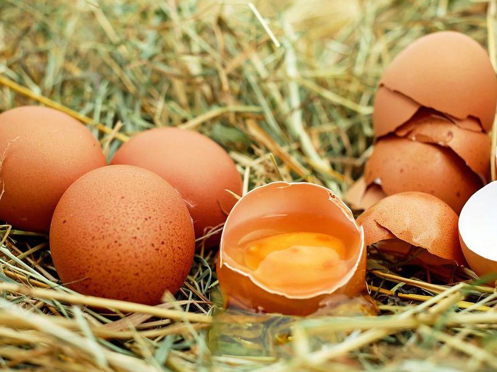 Telur Ayam yang Gurih Enak Ternyata Punya 10 Fakta Menarik Ini (2)