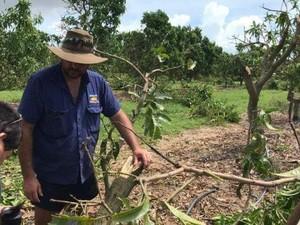 Petani Queensland Rugi Rp 1,5 Triliun Akibat Topan Debbie