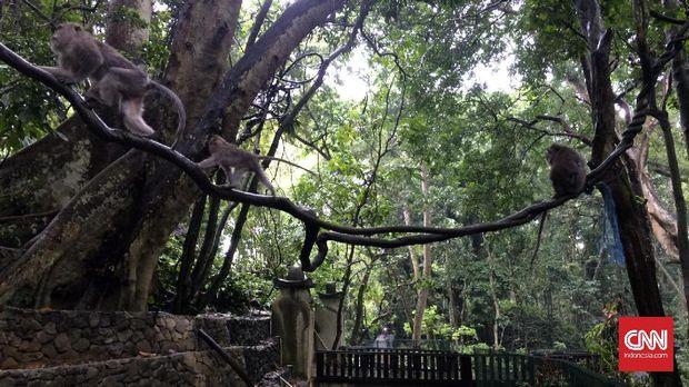 Monkey Forest, Ubud merupakan sebuah hutan yang dihuni oleh kera baliekor panjang. Di hutan ini, wisatawan bisa bisa berjalan-jalan sambilditemani kera yang bebas berkeliaran.