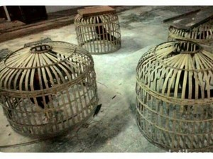 Polres Bengkalis Tangkap 7 Pemain Judi Sabung Ayam