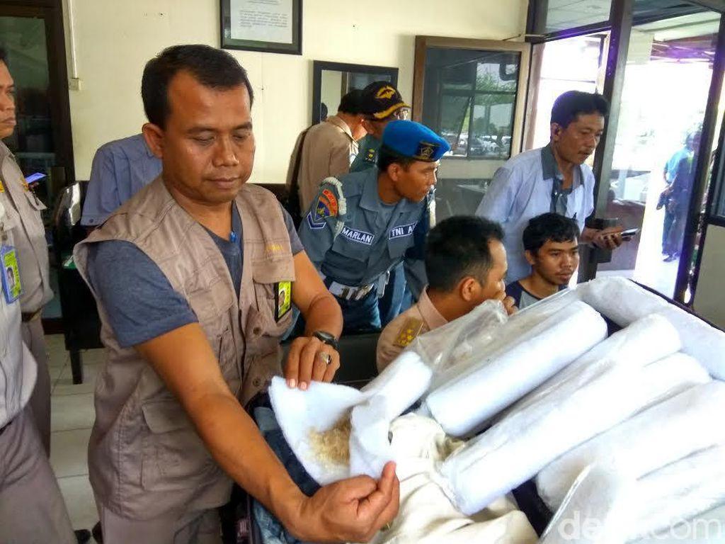 Penyelundupan 7.800 Benih Lobster ke Vietnam Berhasil Digagalkan
