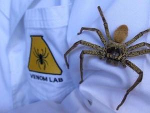 Mengapa Perempuan Lebih Takut pada Laba-laba?