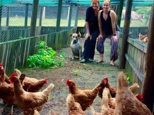 Berkat Status Medsos, Ratusan Ayam di Australia Tak Jadi Dibunuh