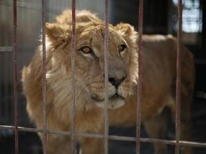 Miris, Ini Dua Ekor Hewan yang Tersisa di Kebun Binatang Mosul