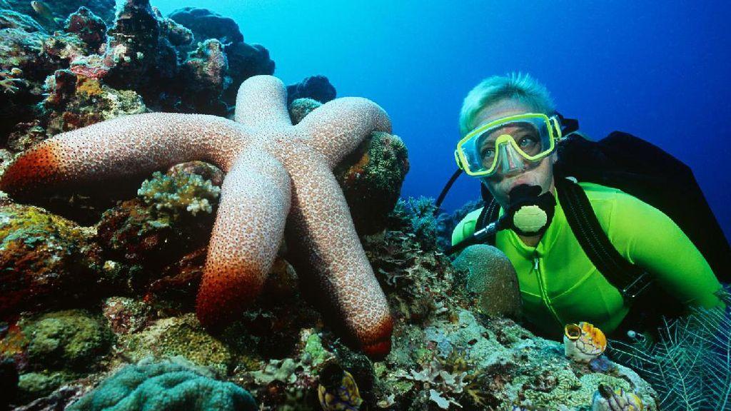 Lagi Diving, Traveler Nemu iPhone Menyala di Bawah Laut