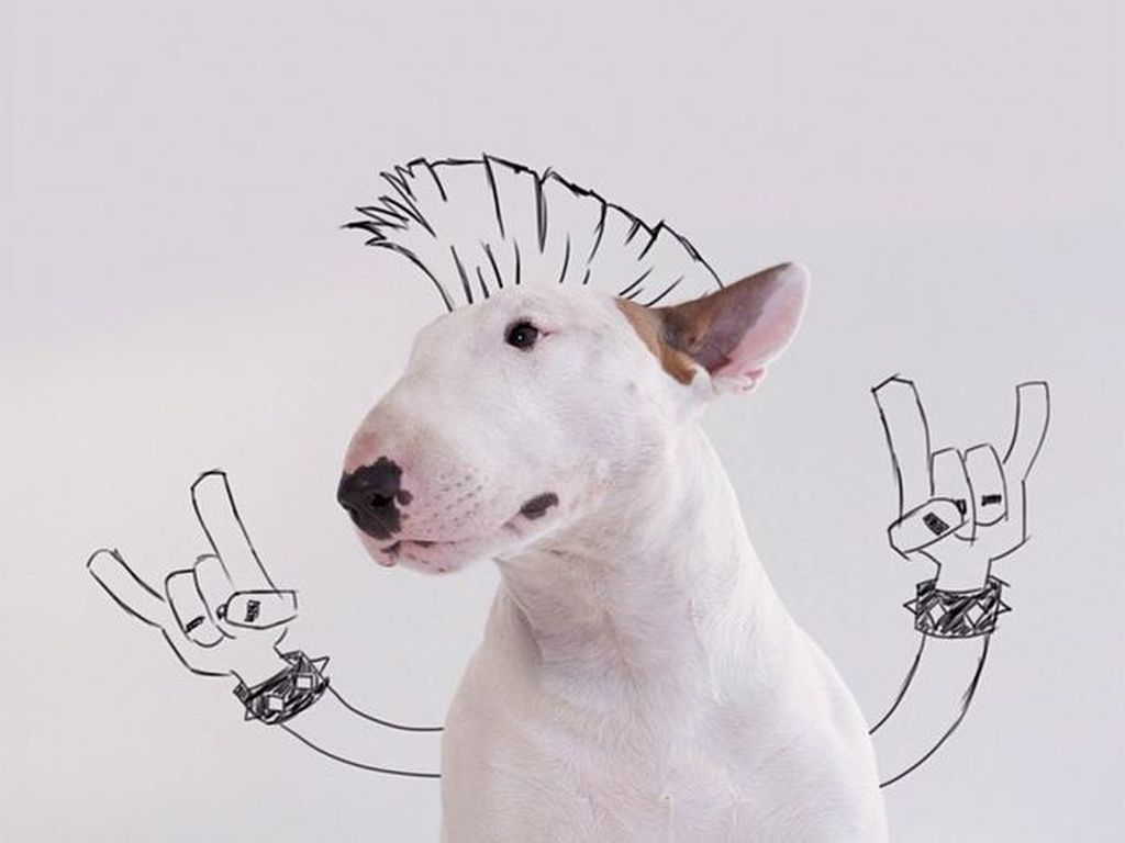 Lucu! Ular Berkacak Pinggang Hingga Anjing Bergaya Punk