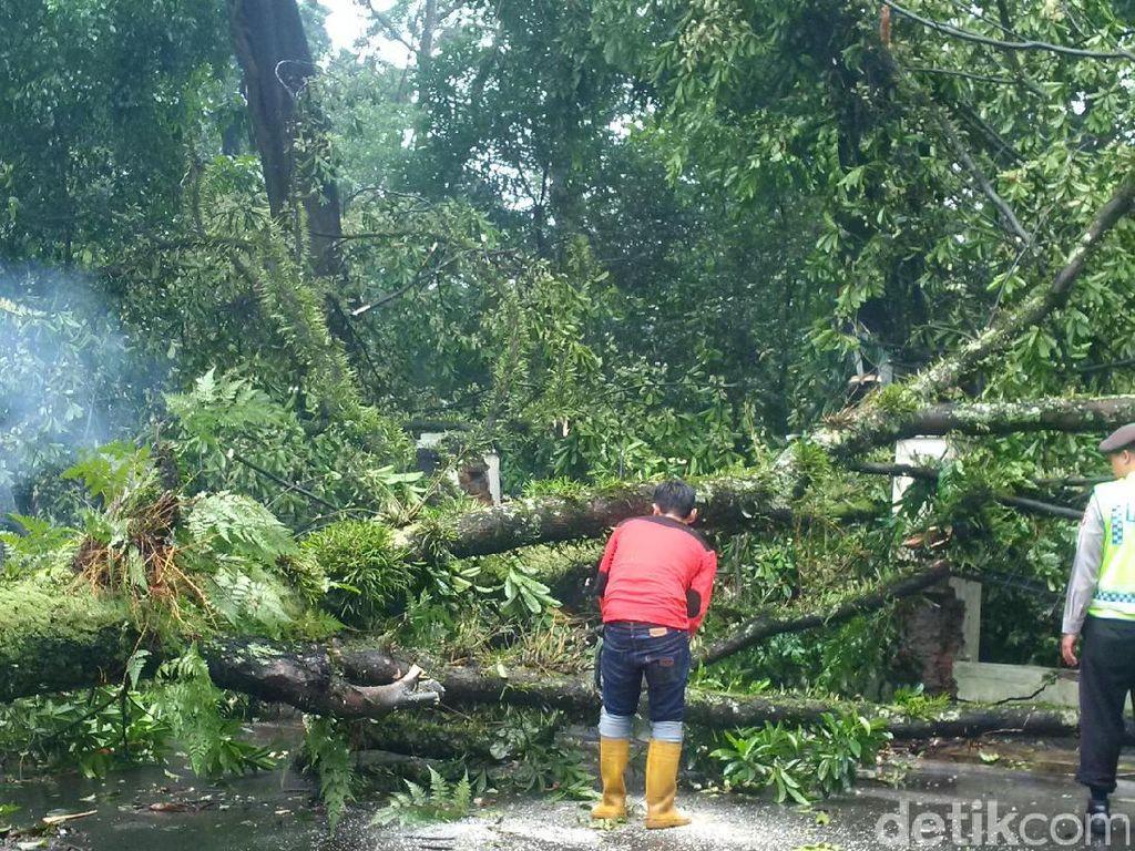 Orang dan Kendaraan Tertimpa Pohon di Bandung Ditanggung Asuransi