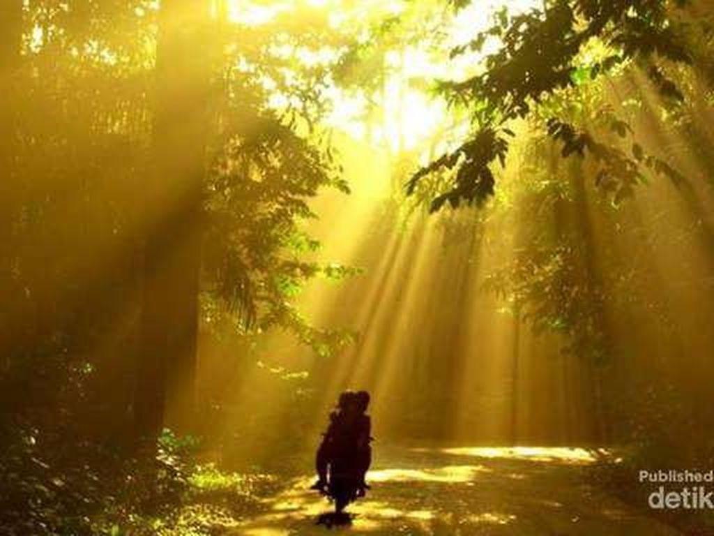 Aneka Destinasi Seru di Bogor untuk Long Weekend