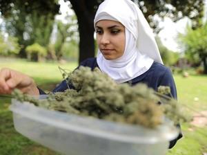 Biarawati AS Produksi Obat-obatan dari Ganja