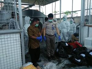 Cegah Flu Burung, Unggas asal Malaysia dan China Dimusnahkan