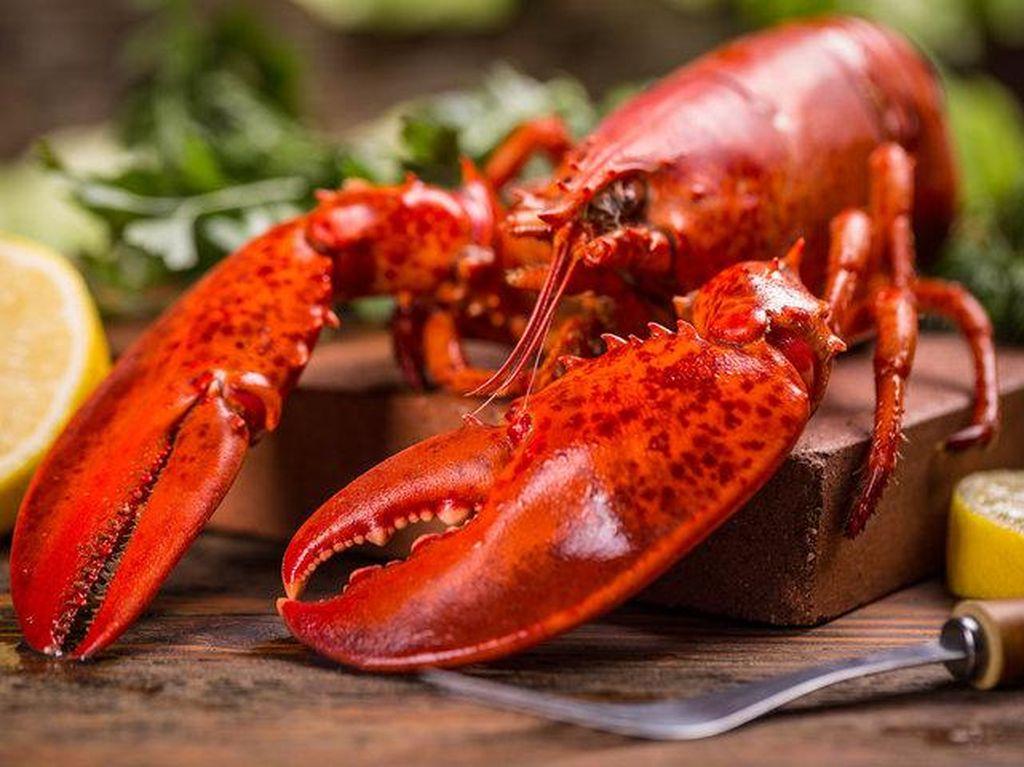 Menteri Susi Larang Nelayan Tangkap Lobster yang Bertelur!