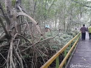 Hutan Bakau Raksasa dari Indragiri Hilir