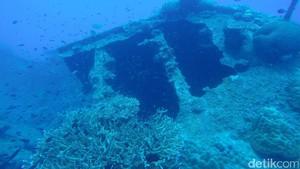 Punya Nyali? Coba Diving di Wreck Karimunjawa Ini