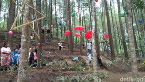 Hutan Pinus Winong di Lereng Semeru Mulai Ramai Pengunjung