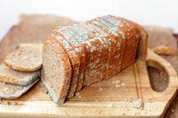 Roti Berjamur Masih Aman Dimakan Asal Perhatikan Hal Penting Ini