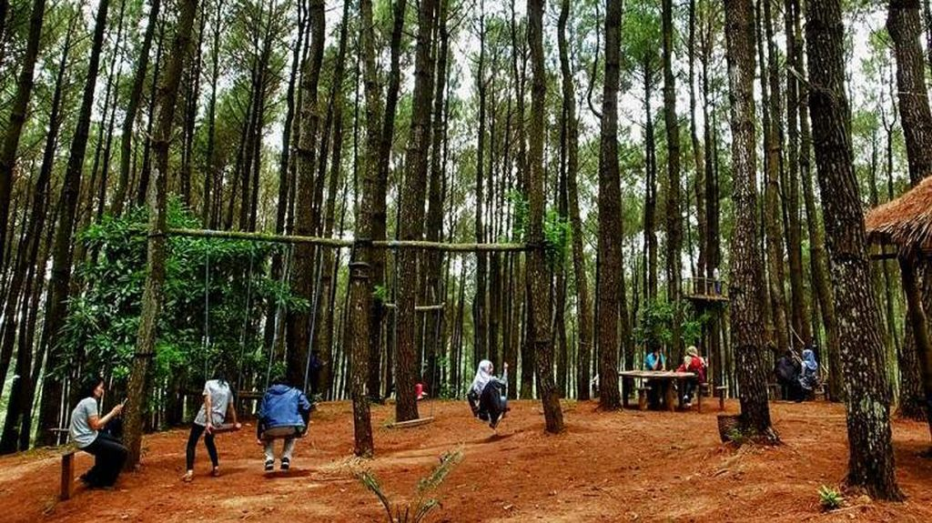 Foto: Hutan Pinus Pengger yang Instagramable di Bantul