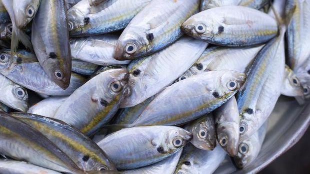5 Ikan Pengganti Salmon untuk Anak, Lebih Murah & Bernutrisi