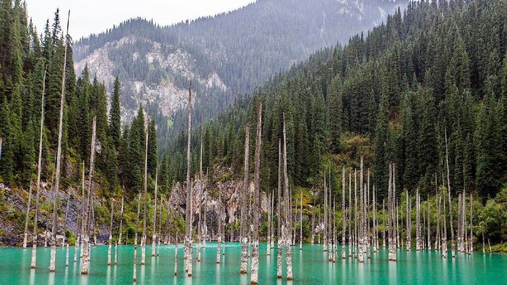 Foto: Bukan Ikan, Danau Ini Berisi Hutan