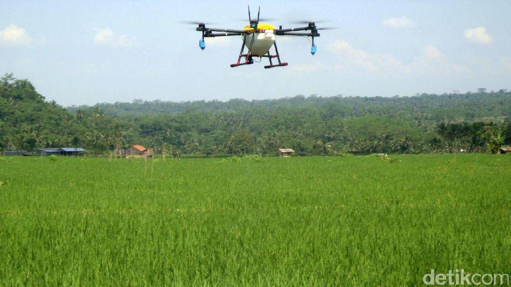 Petani Purbalingga Manfaatkan Drone untuk Proses Pemupukan
