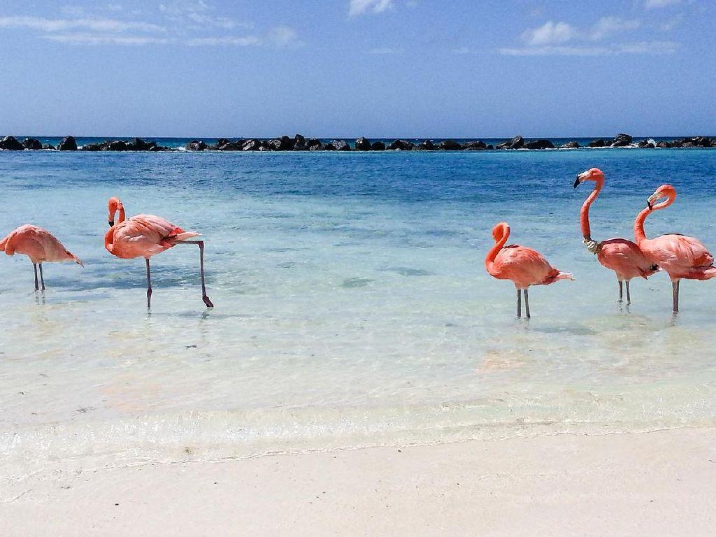 Lowongan Kerja Menarik, Jagain Burung Flamingo