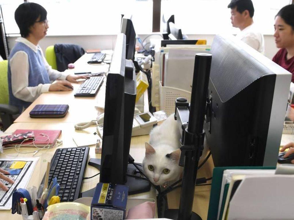 Kucing-kucing Lucu Penghilang Stres di Kantor