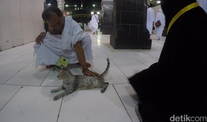 Berkah Umrah Penjual Sandal dan Penyayang Kucing