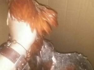 Gerebek Judi Sabung Ayam, Polisi Tangkap 12 Orang