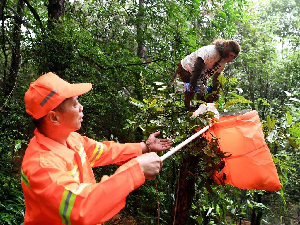 Seekor Monyet di China Bantu Bersihkan Sampah Manusia