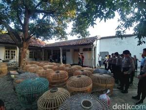 Polresta Cirebon Gerebek Rumah Judi Sabung Ayam