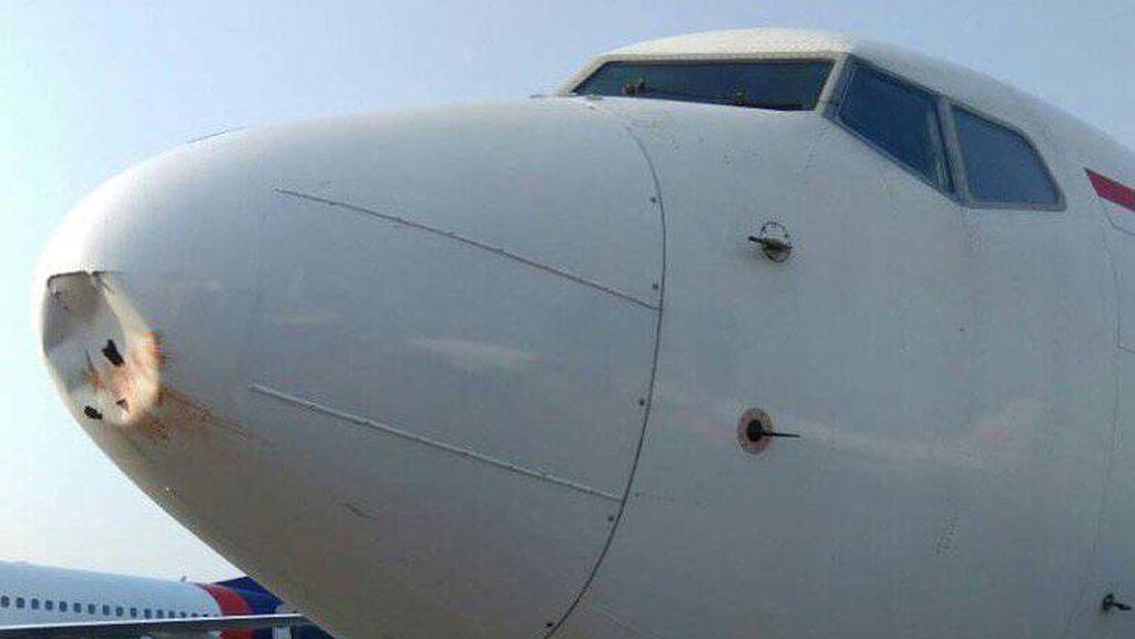 Serangan Bird Strike yang Ancam Penerbangan