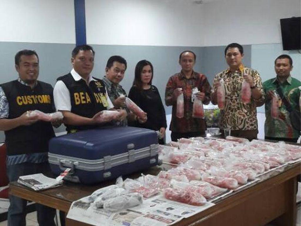 Penyelundupan 40 Ribu Benih Lobster ke Singapura Digagalkan