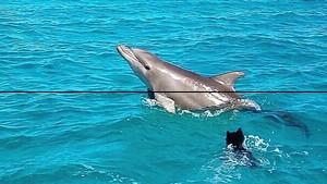 Viral! Saat Anjing Asyik Main Air Bareng Lumba-lumba di Bahama