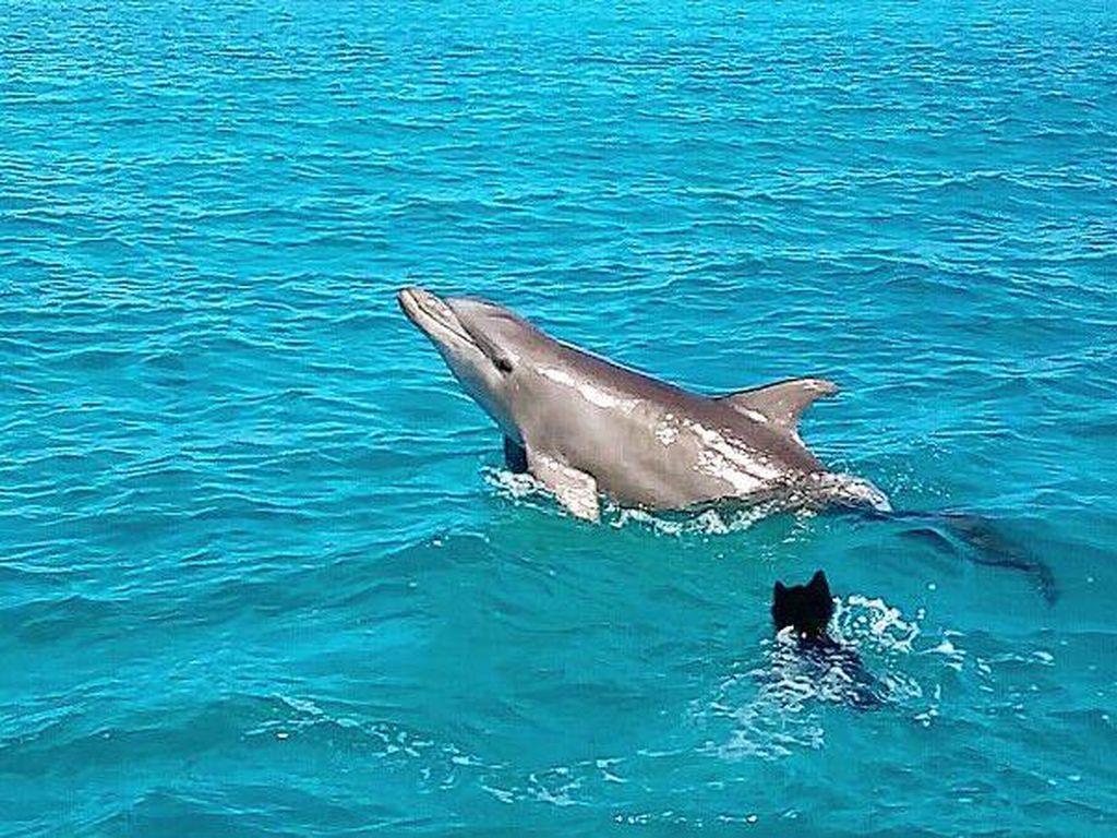 7 Fakta Lumba-lumba, Hewan Tercerdas di Dunia