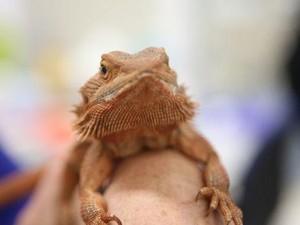 Ilmuwan Australia Berhasil Ungkap Proses Pergantian Kelamin Reptil