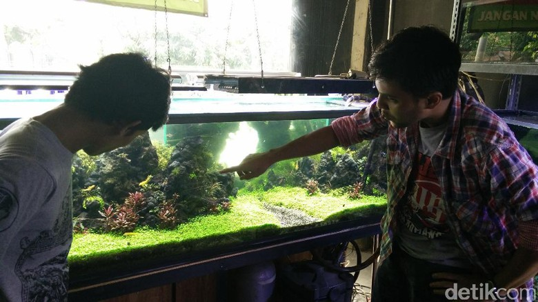 Berkat Hobi Aquascape, Pemuda Ini Raup 40 Juta/Minggu