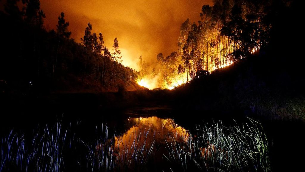 Kebakaran Hutan di Portugal Menewaskan 62 Orang