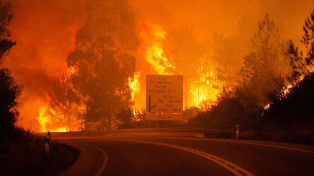 Kebakaran Hutan Dahsyat Terjadi di Portugal, 62 orang tewas
