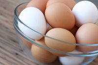 Anak Perlu Makan Telur Tiap Hari Karena 10 Khasiat Sehatnya
