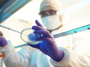 Ini Cara Pengujian Kandungan DNA Babi pada Bahan Pangan dengan Metode PCR