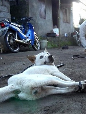 Pejabat Humas Bali Bantah Soal Turis yang Terkecoh Santap Anjing